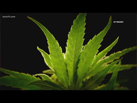 as-nearby-states-legalize-recreational-marijuana-minnesota-faces-opposition