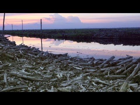 cnn-explains-deforestation