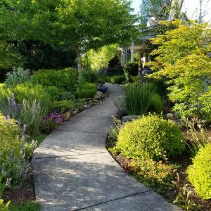 Plants along a path