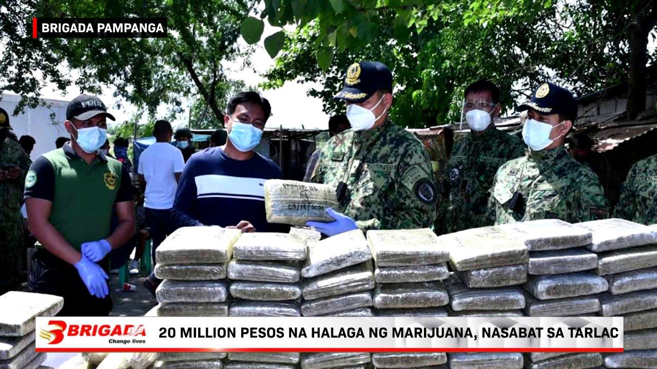 20-million-pesos-na-halaga-ng-marijuana-nasabat-sa-tarlac-brigada-pampanga