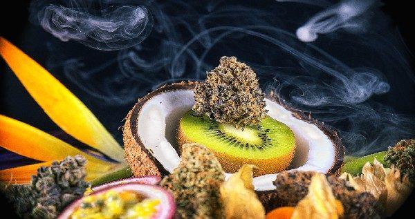 best-tasting-marijuana-strains-2021-our-picks