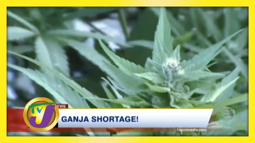 ganja-shortage-in-jamaica-february-1-2021