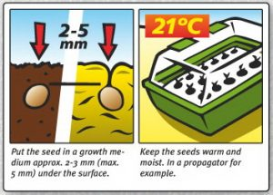 What are the best conditions for seedlings?