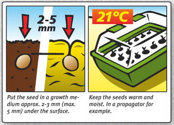 what-are-the-best-conditions-for-seedlings