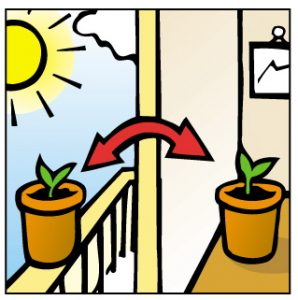 When can seedlings be put under lights or in the sun?