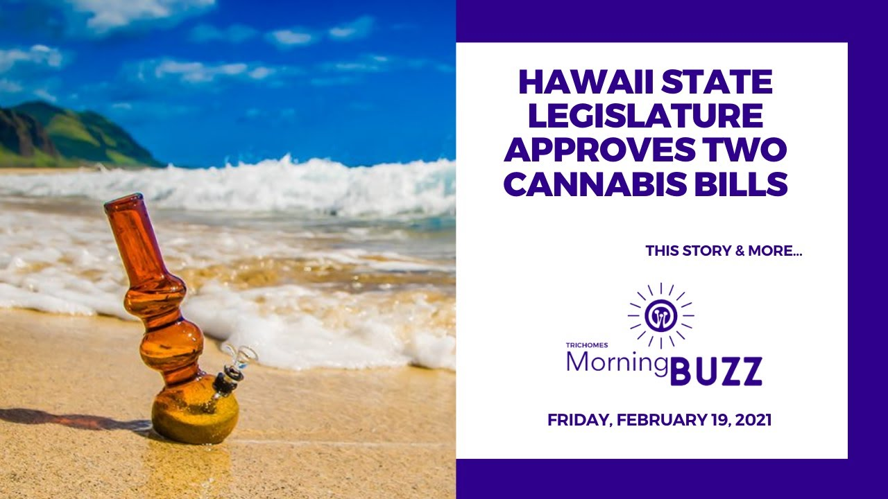 hawaii-state-legislature-approves-two-cannabis-bills-trichomes-morning-buzz
