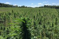 new-guidance-on-waste-disposal-for-hemp-producers