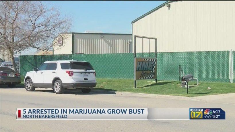 nearly-13m-in-marijuana-seized-5-men-arrested-in-north-bakersfield-bust