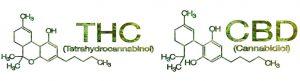 Cannabinoid Science 101: What Is Cannabidiol (CBD)?