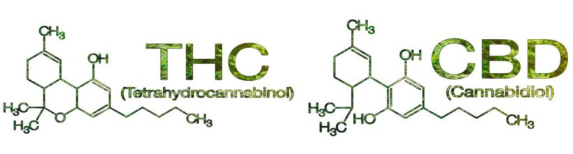 cannabinoid-science-101-what-is-cannabidiol-cbd