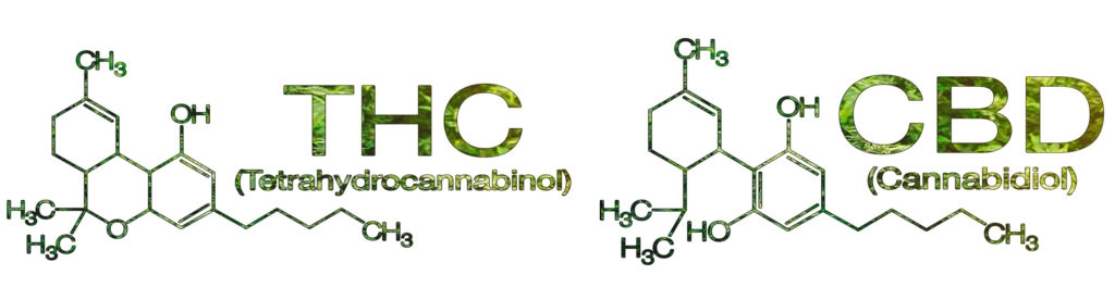 cannabinoid-science-101-what-is-cannabidiol-cbd