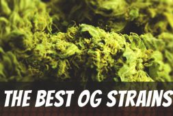 best-og-strains-of-all-time