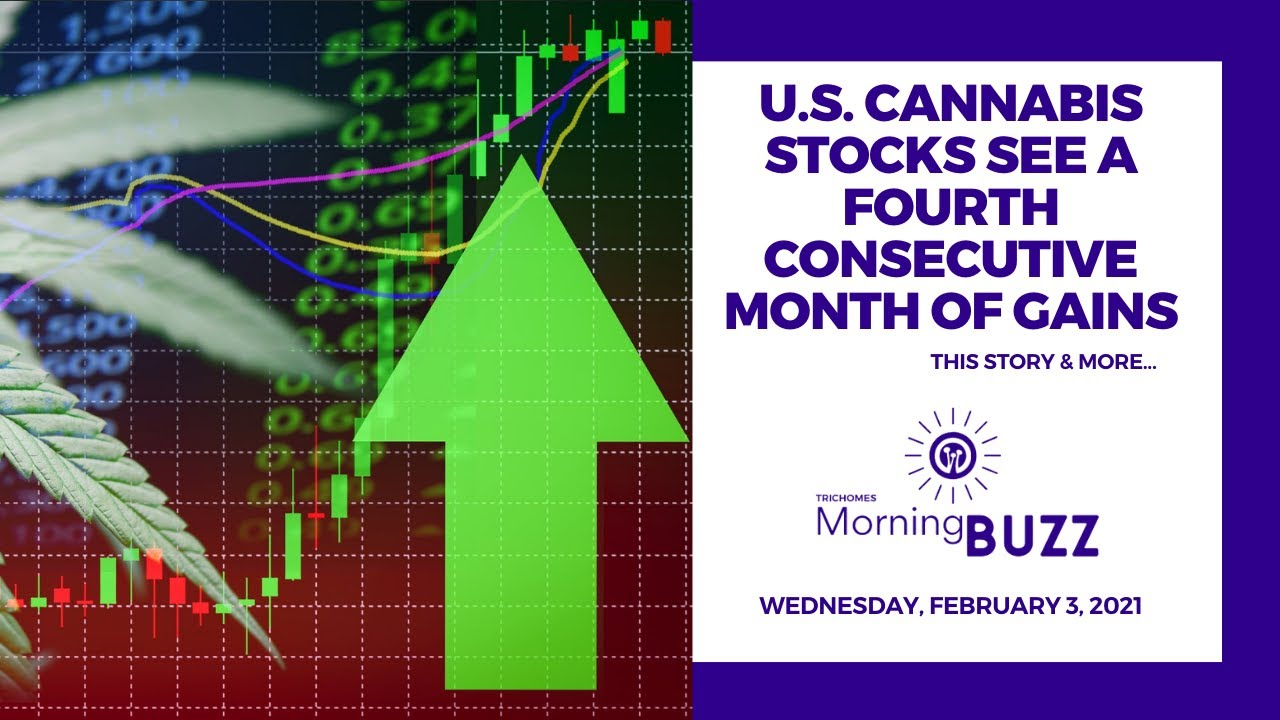 u-s-cannabis-stocks-see-a-fourth-consecutive-month-of-gains-trichomes-morning-buzz