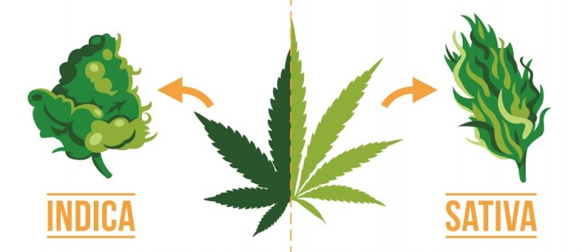 what-is-the-difference-between-indica-and-sativa