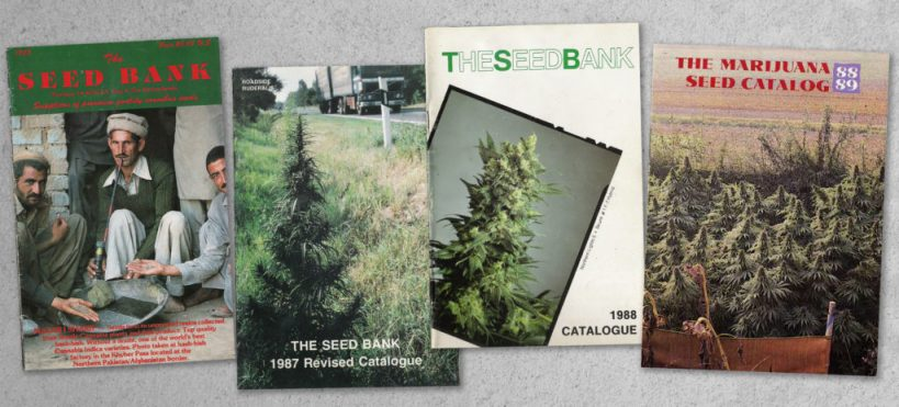 sensi-seeds-35-year-anniversary-celebrations-begin