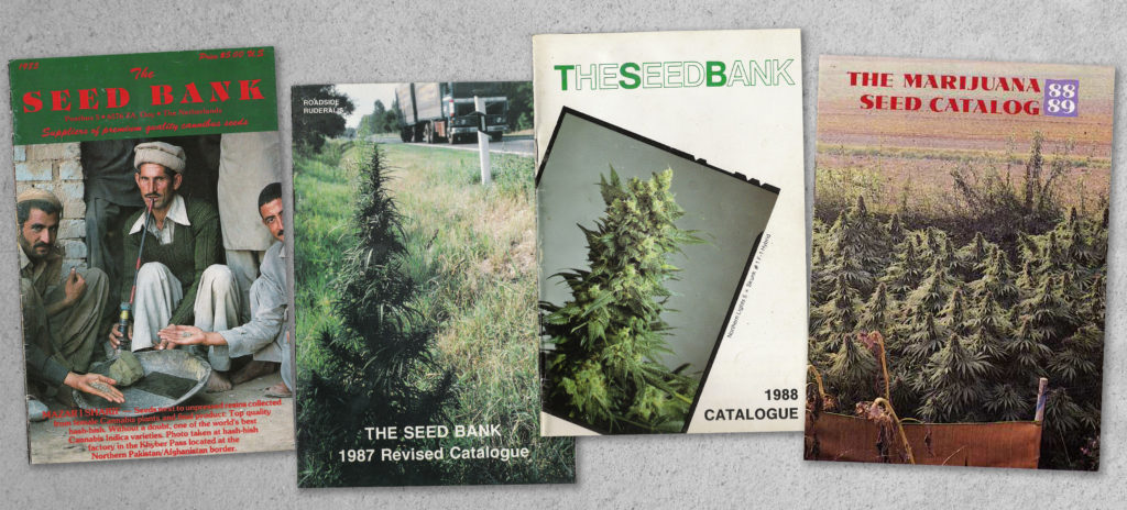 sensi-seeds-35-year-anniversary-celebrations-begin