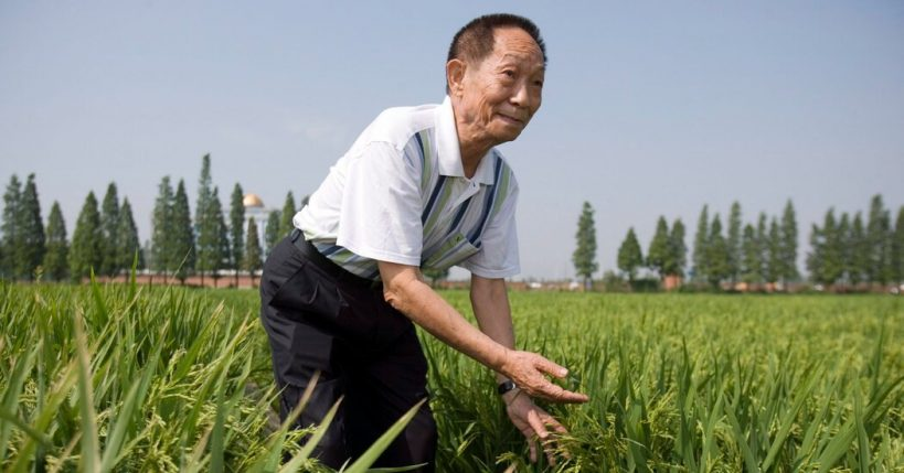 yuan-longping-plant-scientist-who-helped-curb-famine-dies-at-90